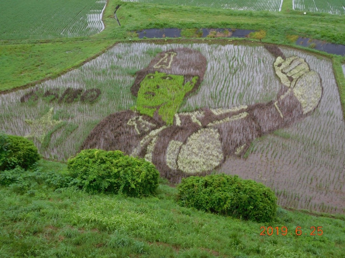 Rice field art in Oshu pays tribute to Shohei Ohtani.